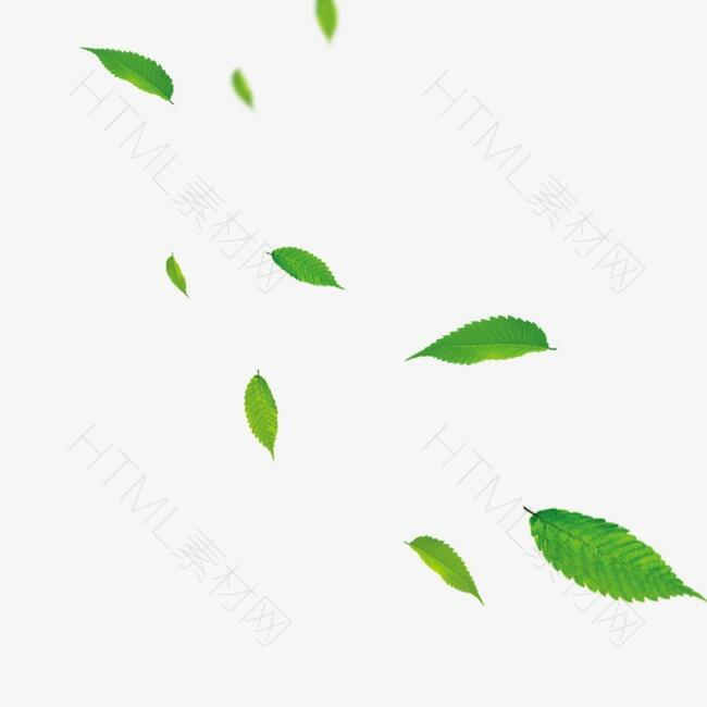 漂浮绿色叶子