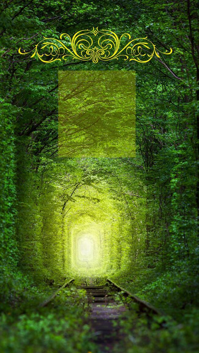优美森林清新自然风景背景海报
