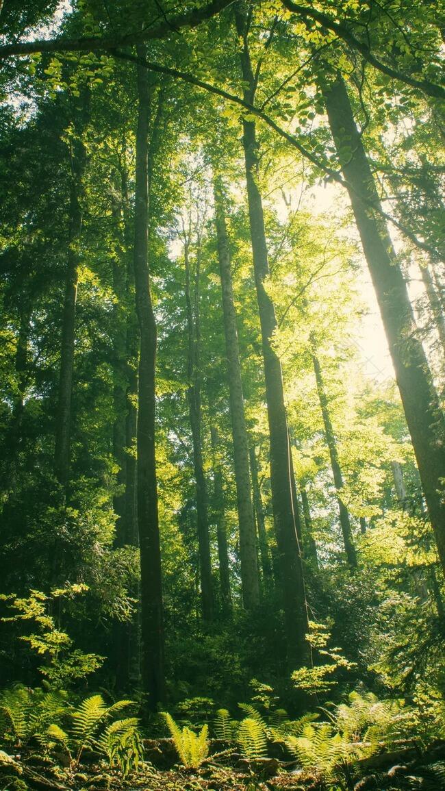 绿色森林阳光照射户外摄影H5背景