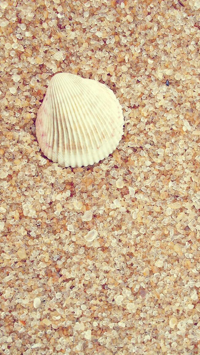 摄影沙子贝壳背景简单背景H5背景