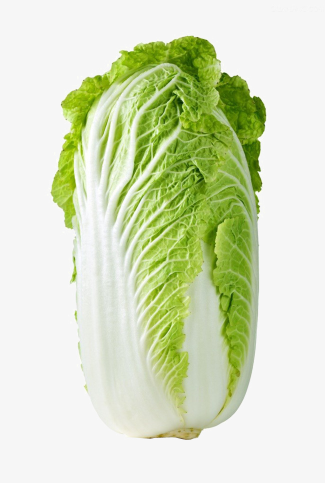 大白菜高清素材