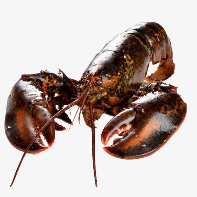 加拿大进口 鲜活龙虾