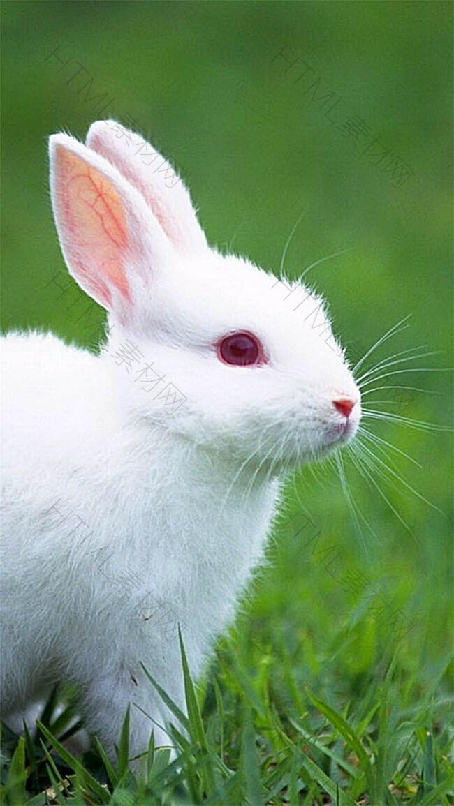 可爱兔子清新H5背景