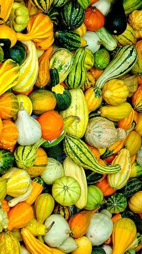 新鲜蔬果H5背景