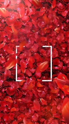 红色大气玫瑰花瓣护肤品背景图